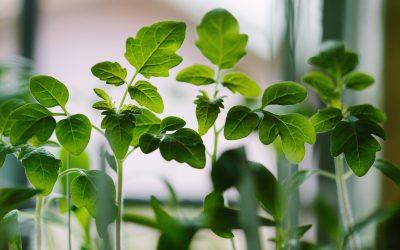 Ateliers plantes